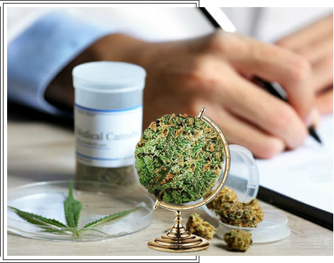 Cannabis Stocks Software Review Why you should invest?